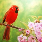 Image of Cardinal in Kanza Cherry Tree